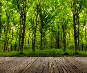 Eco-friendly-flooring options include bamboo, hardwood, and cork